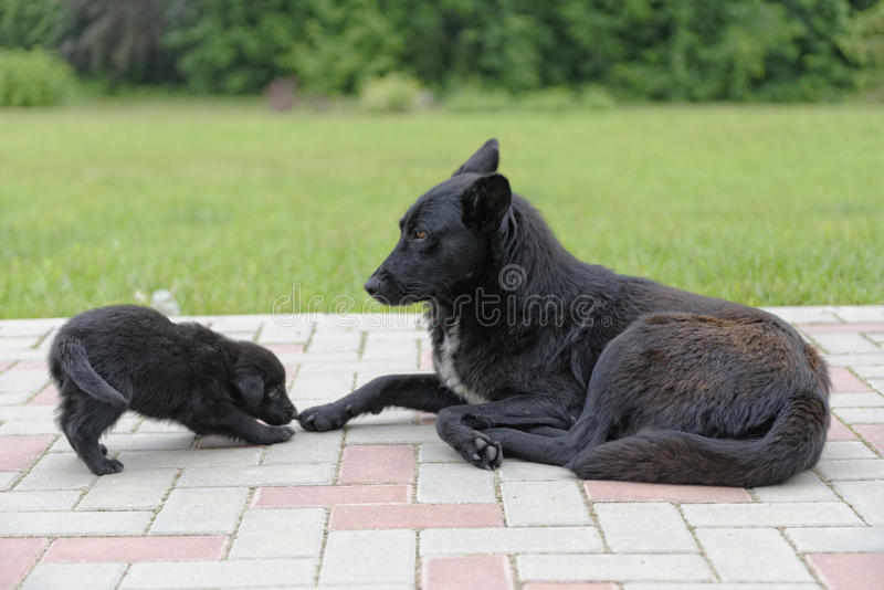 Puppy Dog With Mother Stock Image