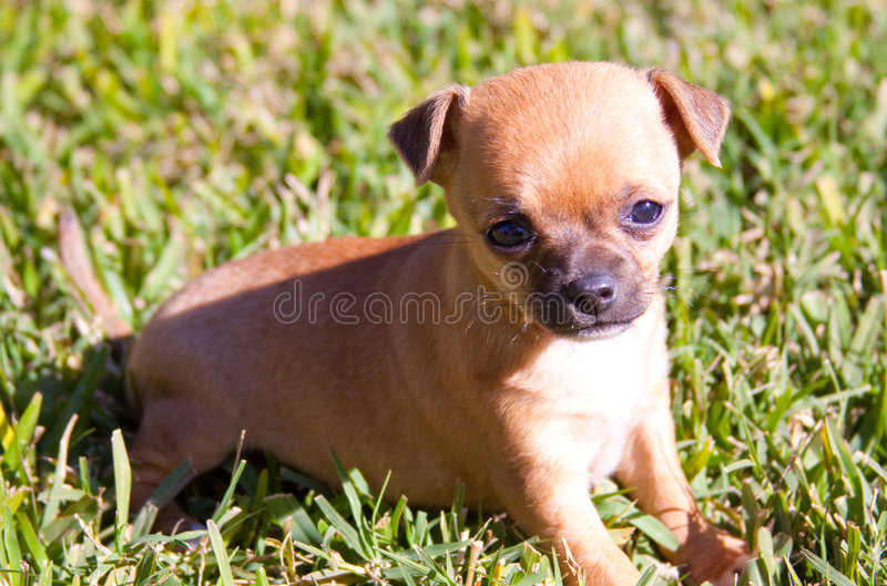 Download Puppy Dog Ready To Play Stock Images - Image: 7797224