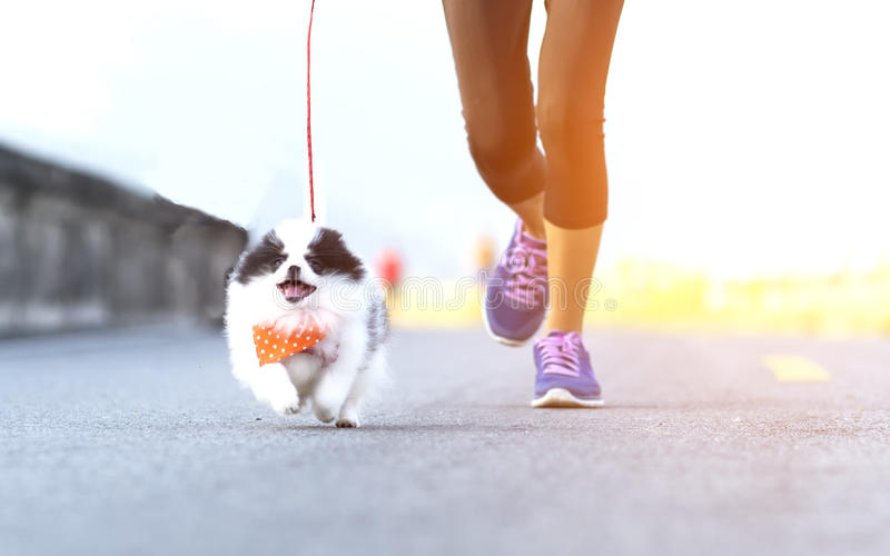 Puppy dog running exercise on the street park stock photos