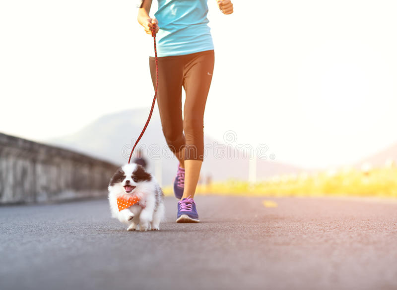 Puppy dog running exercise on the street park royalty free stock images