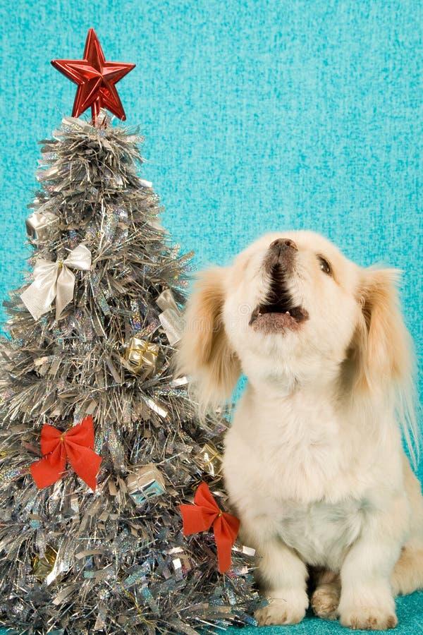 Puppy dog singing carols next to Christmas tree on blue background royalty free stock image