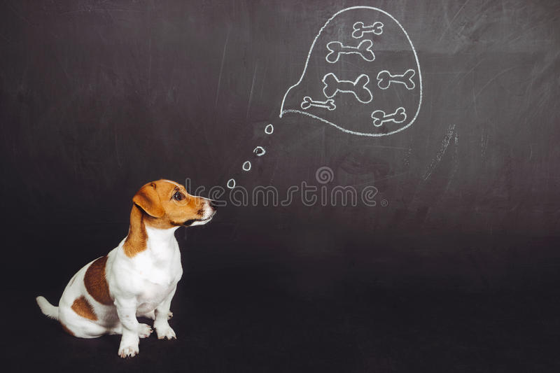 Puppy dog sitting and dreaming of natural food in a thought bubble near blackboard. royalty free stock photo