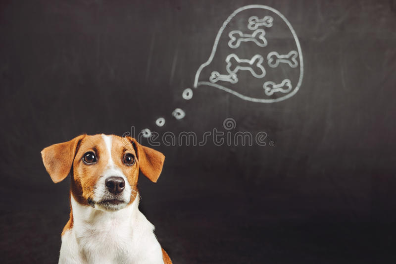 Puppy dog sitting and dreaming of natural food in a thought bubble near blackboard. stock image