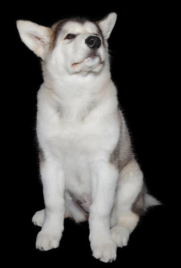 Download Puppy dog training stock photo. Image of animal, background - 33755670