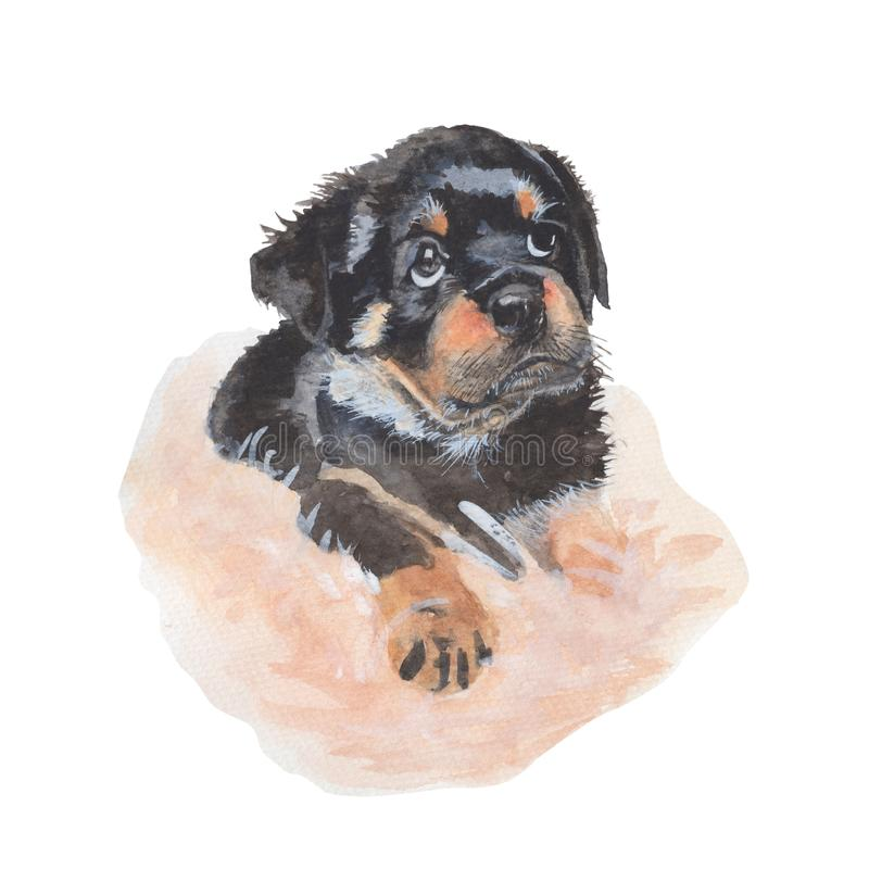 Puppy dog Watercolor painting isolated. Watercolor hand painted Puppy dog illustrations. Puppy dog isolated on white background royalty free illustration
