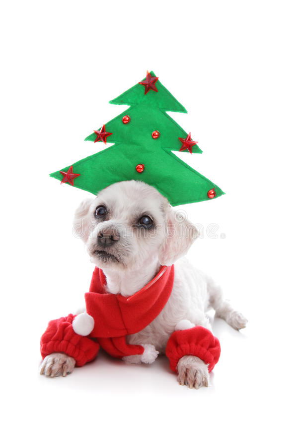 Puppy dog wearing Christmas tree hat royalty free stock photography