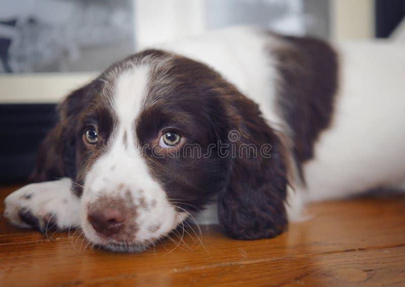 Puppy dog stock image