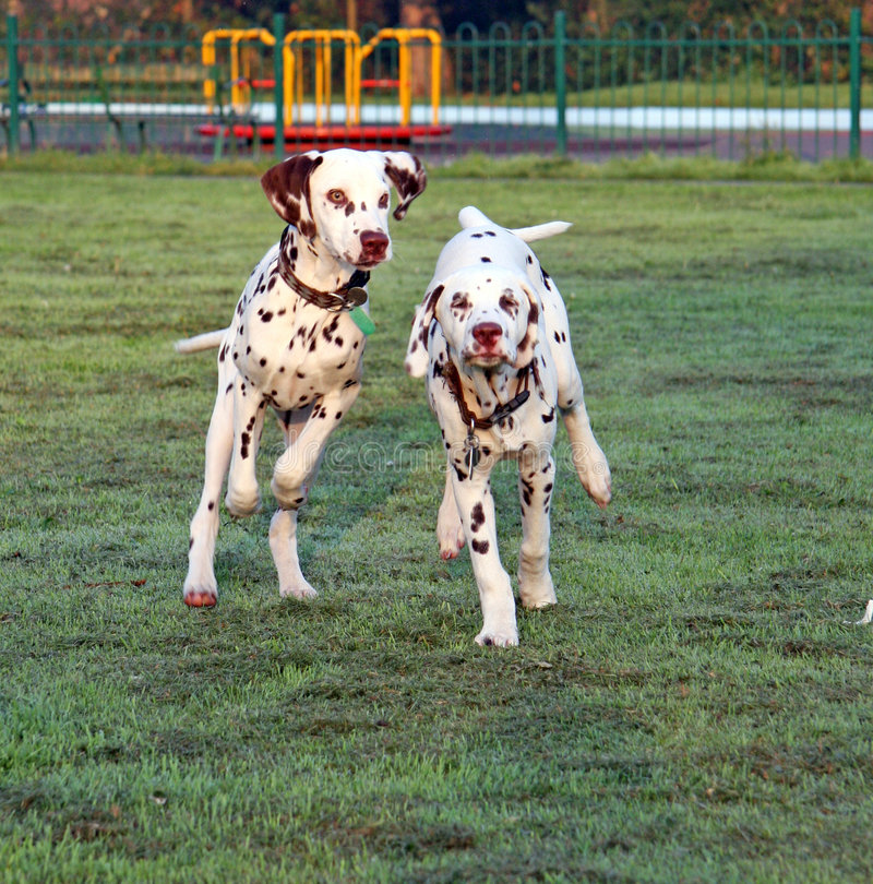 Free Puppy Dogs Running Royalty Free Stock Photos - 8803148