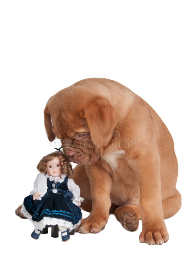 Puppy with a doll stock photos