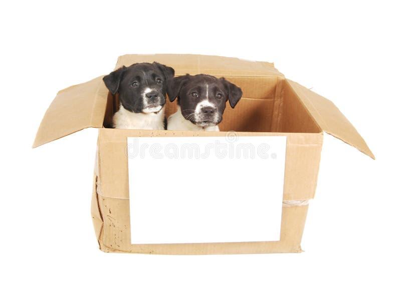 Puppy in een doos met een leeg teken. stock afbeeldingen