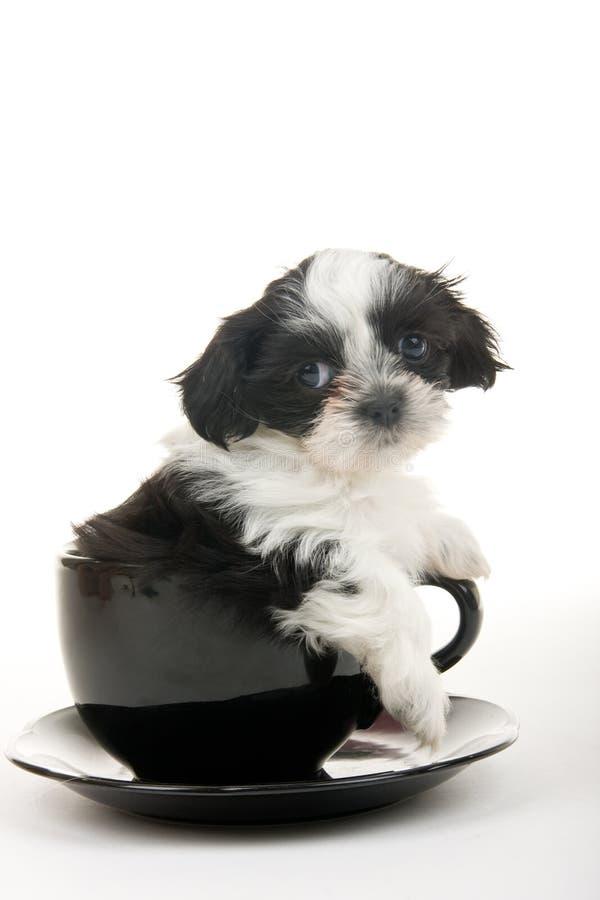 Puppy in een Kop royalty-vrije stock fotografie
