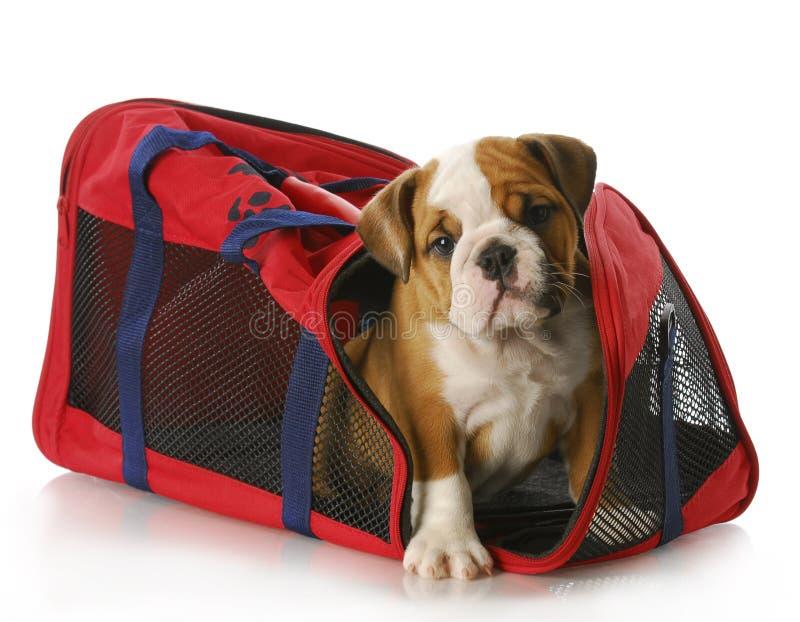 Puppy in een reiszak royalty-vrije stock afbeelding