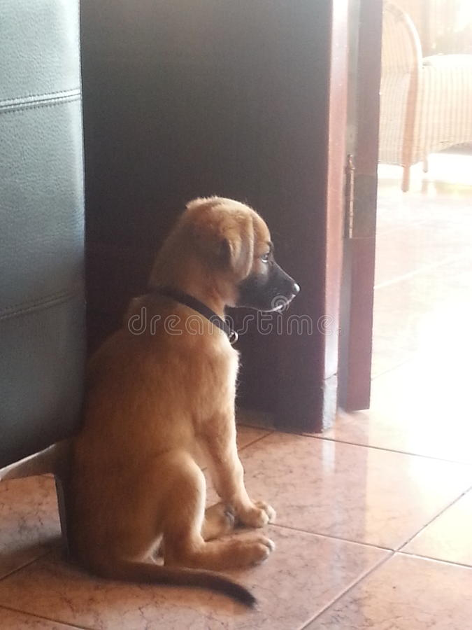 Puppy Eeva stock photo