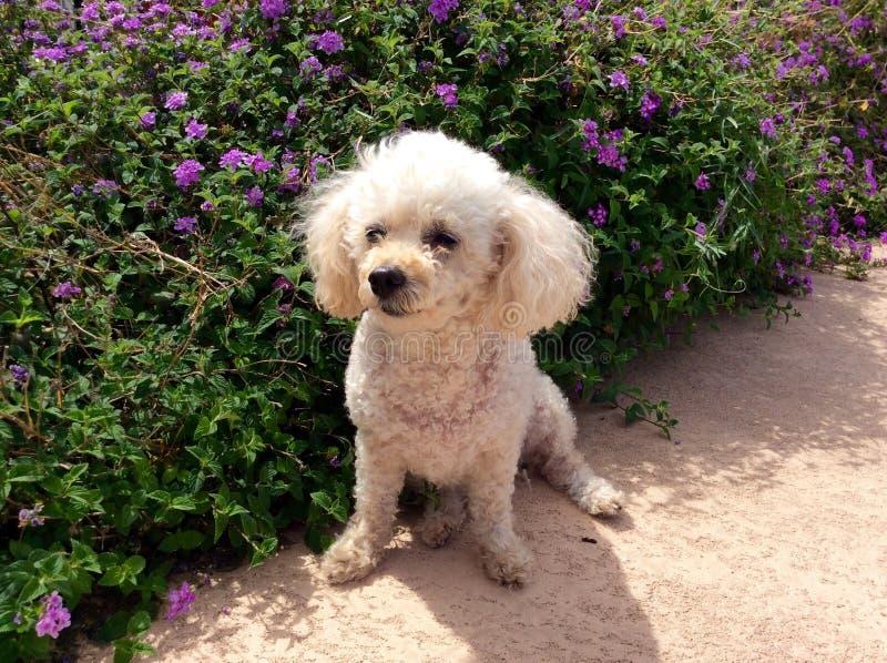 Puppy en bloemen royalty-vrije stock foto