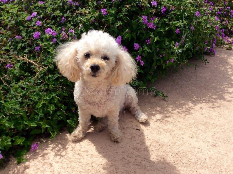 Puppy en bloemen royalty-vrije stock afbeeldingen