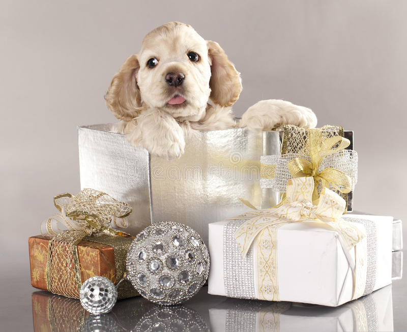 Puppy en giften royalty-vrije stock foto's