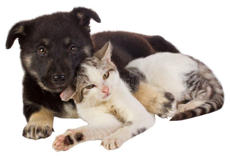 Puppy en kat stock afbeeldingen