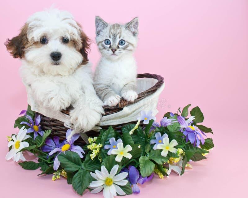 Puppy en katje stock fotografie