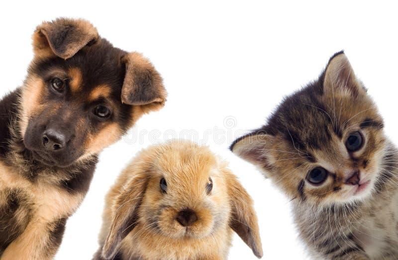 Puppy en katje stock foto
