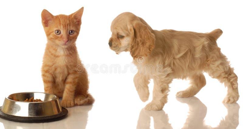 Puppy en katje met voedsel royalty-vrije stock afbeelding