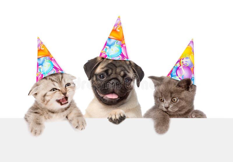 Puppy en katjes in verjaardagshoeden die van achter lege raad gluren Geïsoleerd op wit royalty-vrije stock foto