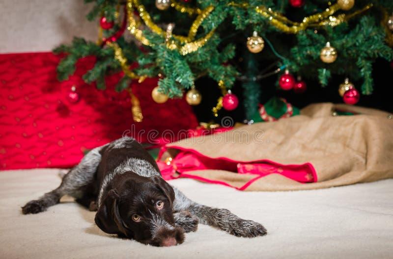 Puppy en Kerstboom royalty-vrije stock fotografie
