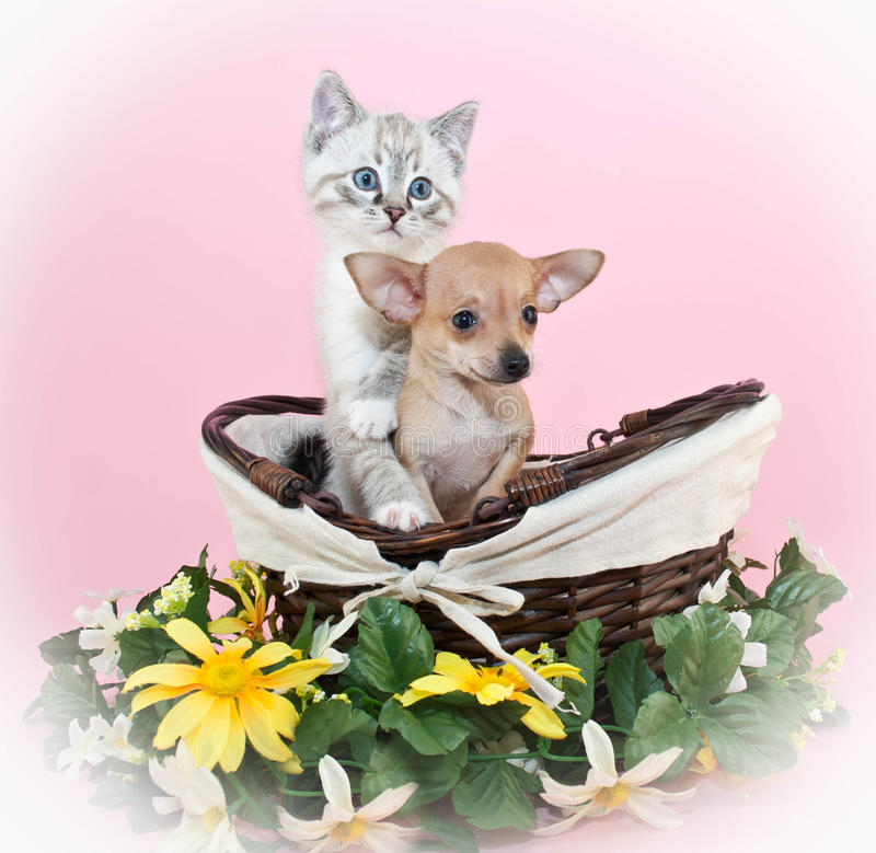 Puppy en Kitten Friends stock foto