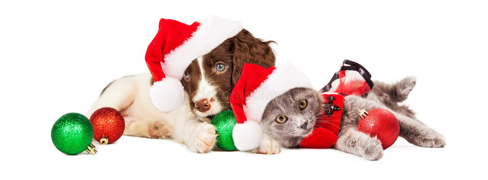 Puppy en Kitten Laying With Christmas Ornaments stock foto's