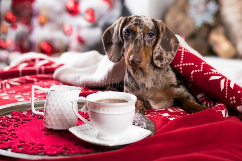 Puppy en koffiekop stock afbeelding