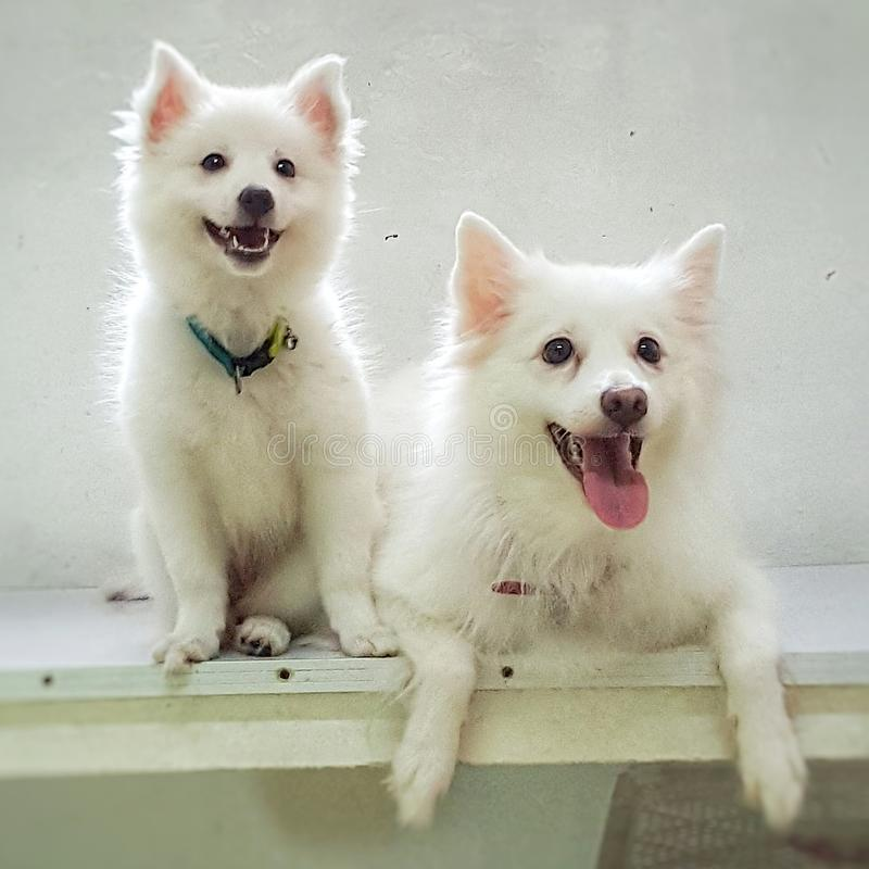 Puppy en mama royalty-vrije stock fotografie
