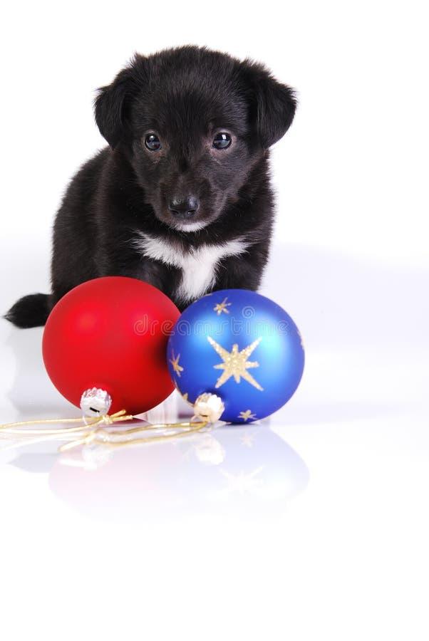 Puppy en twee ballen van Kerstmis stock afbeeldingen
