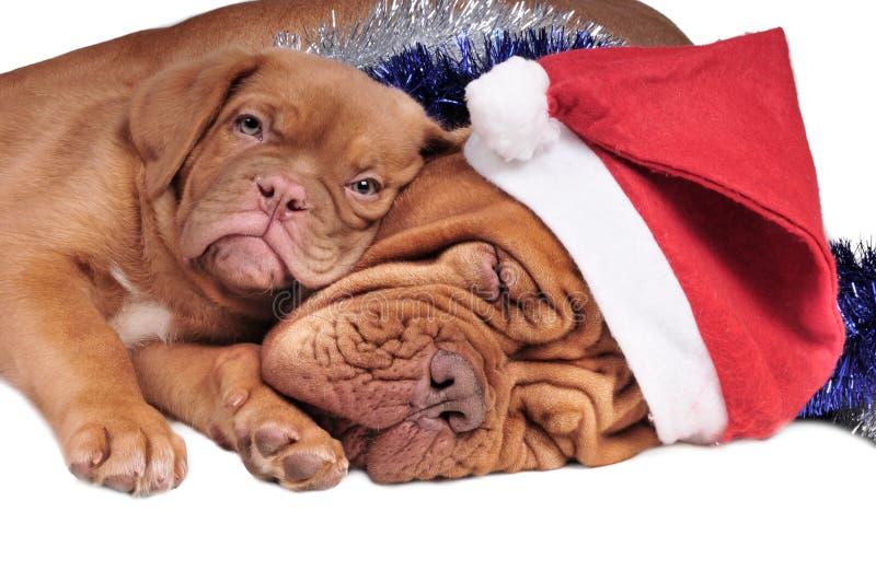 Puppy en zijn mamma stock foto's