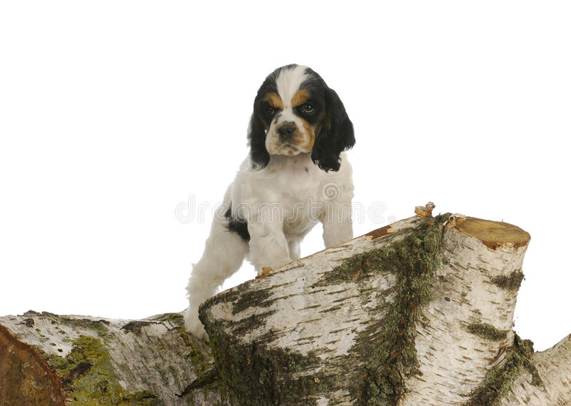 Download Puppy exploring stock image. Image of doggy, exercise - 22489985