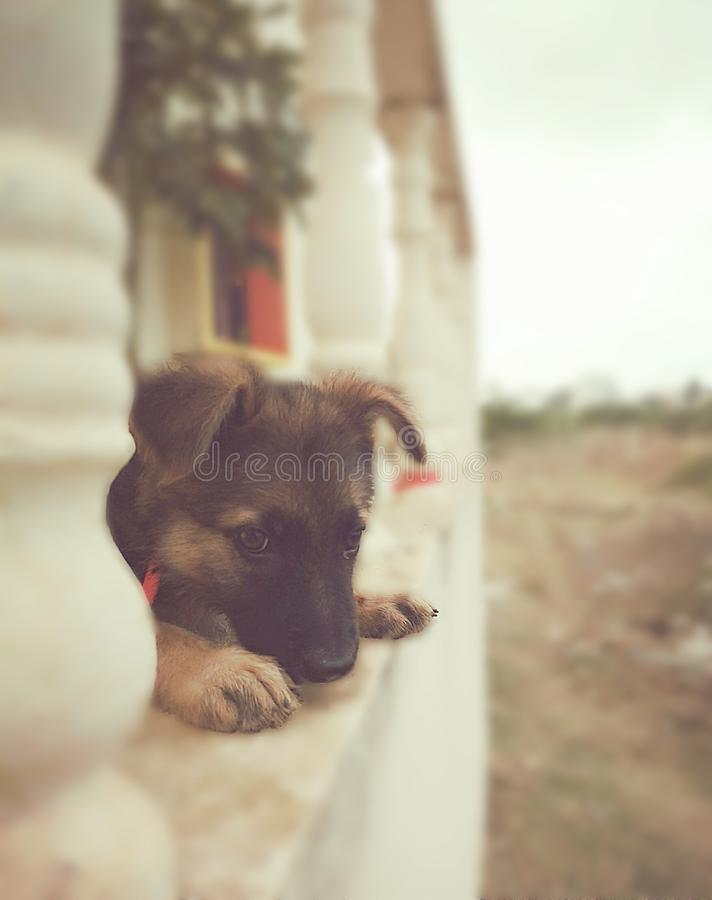Puppy Eye's stock image