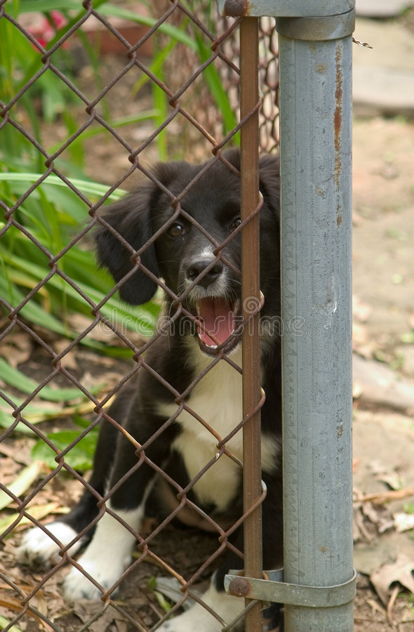 Download Puppy at the fence stock image. Image of puppy, baby, garden - 5109