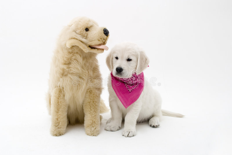 Puppy and friend royalty free stock images