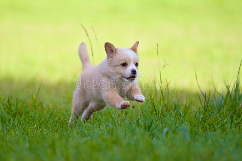 Puppy in full action stock images