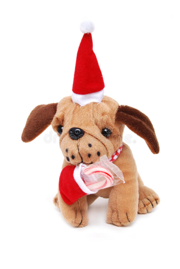 Download Puppy Gift stock image. Image of animal, cane, candy - 11665327