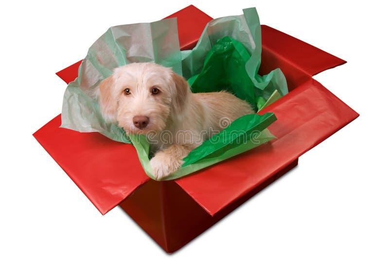 Puppy in giftdoos royalty-vrije stock fotografie