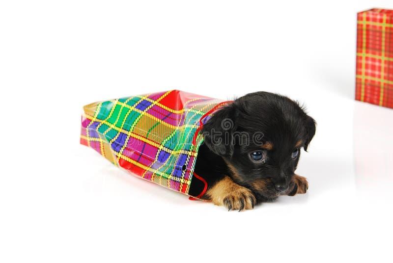 Puppy in giftzak royalty-vrije stock foto