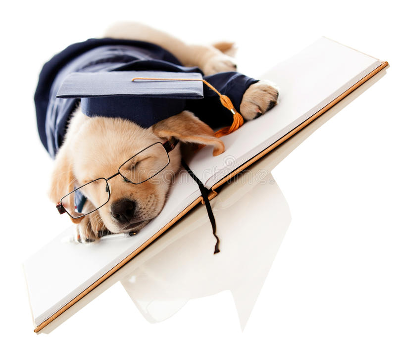Download Puppy Graduating From School Stock Photo - Image: 26674294