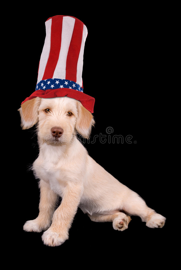 Puppy in hat stock images