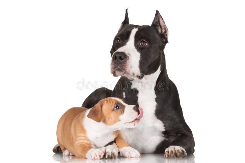 Puppy het spelen met zijn moeder stock afbeelding