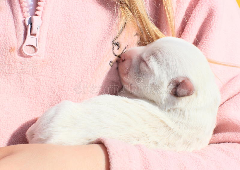 Puppy holded in kids hands. White blind puppy holded in hands of a little girl in pink royalty free stock images