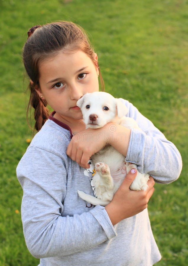 Puppy holded in kids hands. White little puppy holded in hands of a little brunette girl in grey stock images