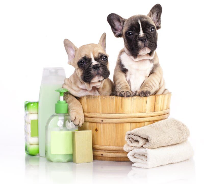 Puppy in houten wasbassin stock afbeelding