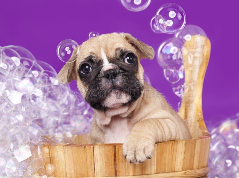 Puppy in houten wasbassin stock foto