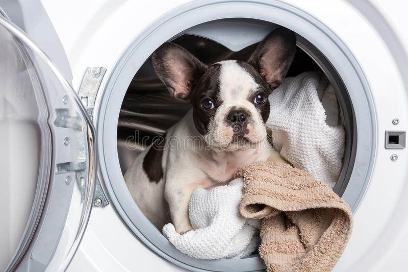 Download Puppy Inside The Washing Machine Stock Photo - Image: 31689986