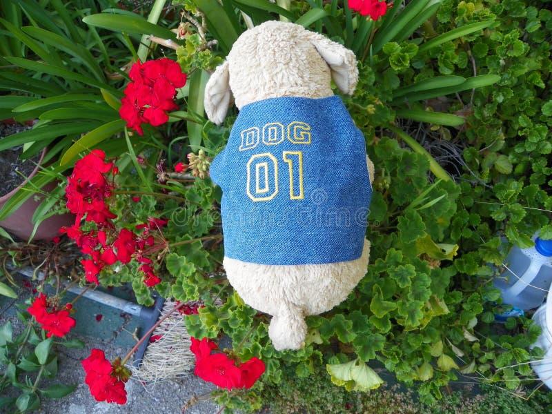 Puppy in Jean Vest Number 1 Hond royalty-vrije stock fotografie