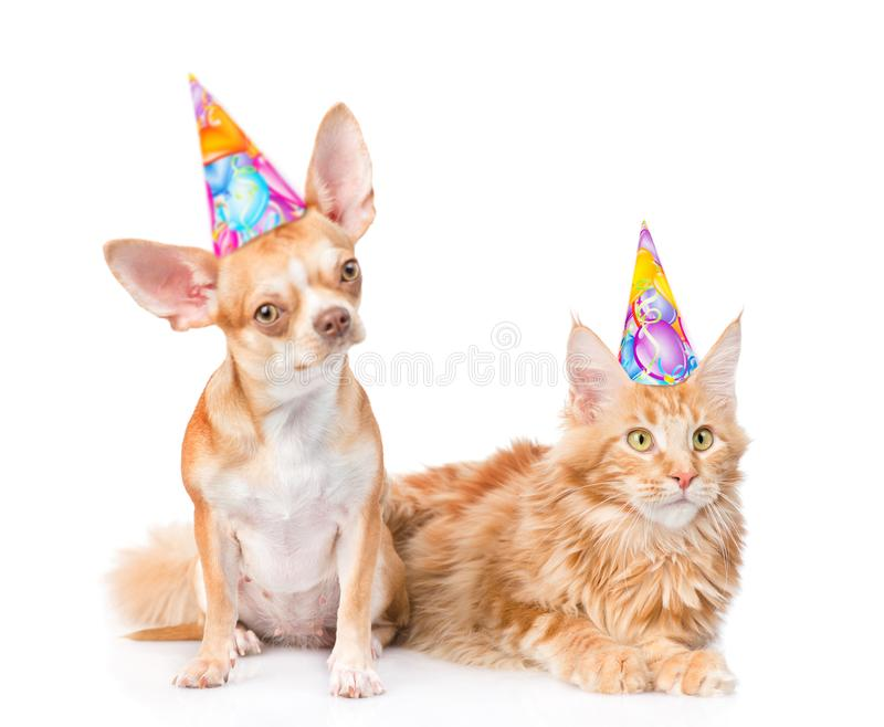 Puppy and kitten in birthday hats looking at camera together. isolated royalty free stock photos